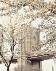 Spring Time in Brooklyn