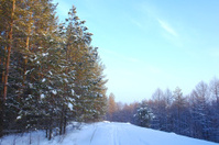 Evening winter landscape in forest