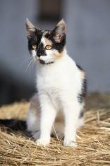 Nice three-coloured cat sitting on a straw
