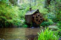 Waterwheel in the Forest