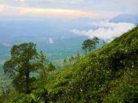Tea plantations close to Haputale, Sri Lanka