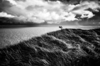 White cliffs of Dover in grayscale