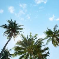 An image of nice palm trees