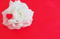 Red Heart on white silk Rose