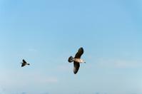 Seagulls in a sky.