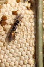 Bee and chrysalis and Honeycomb on wood