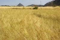 Field in Ethiopia