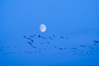 Silhouette birds and moon
