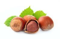 filbert nuts
