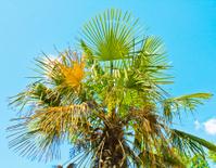 Palm on sky