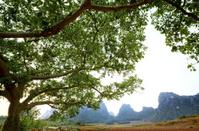 Comfortable mountain green nature scenery