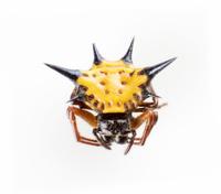 Hexagon spider