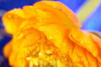 Fresh orange flower