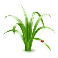 Ladybird on grass. Vector illustration.