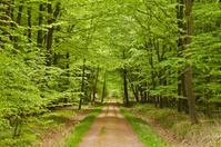 Beech Spring Green Wagon Trail
