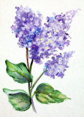 Original Art Watercolor painting of Lilacs