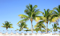 Tropical beach with palms and sun loungers. Resort on Bahamas
