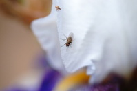 Housefly and shield bug