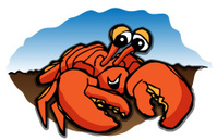Beach Sand Crab