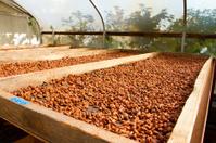 Cacao Nibs Roasting on Flats