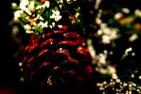 Red Christmas Acorn