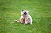 funny dog with fleas