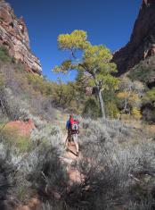 Canyon Hiker