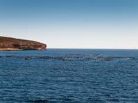 Offshore Fish Farm