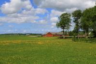 Beautiful Sweden with dandelions