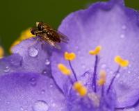 Sex with flies
