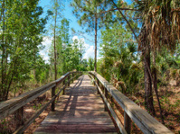 Trail Walkway