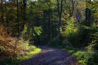 Last fall light
