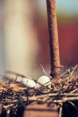 New York Pigeon Nest