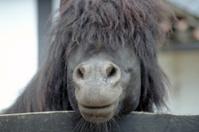 Cheeky pony