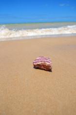 Stone in the sand (Brazil)