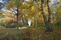 Autumn park with monument