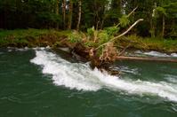 Sweeper River Snag
