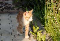 Little kitten walk