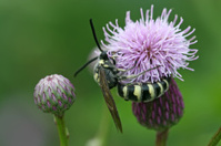 bee seek honey on a flower