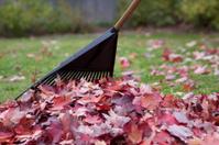 Gardening autmun leaves