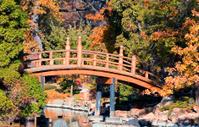 Fall in Japanese garden