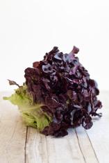 Lolla Rosa baby lettuce
