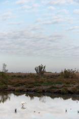 Bird in lagoon