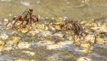 crab on the beach among rocks