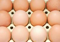 twelve eggs brown chicken in a box
