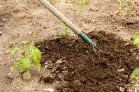 cultivating a garden