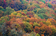 Autumn In Virginia
