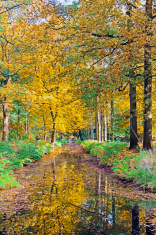 Fall in the countryside from Netherlands