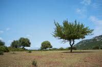 Meager landscape