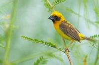 Bird of Thailand
